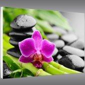 Tableau Forex Orchidée