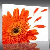 Tableau Plexi Flower