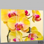 Tryptyk Forex - Orchidee