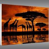 Africa - Forex Print