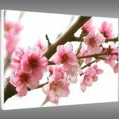 Flowers - Forex Print