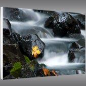 Nature - Forex Print